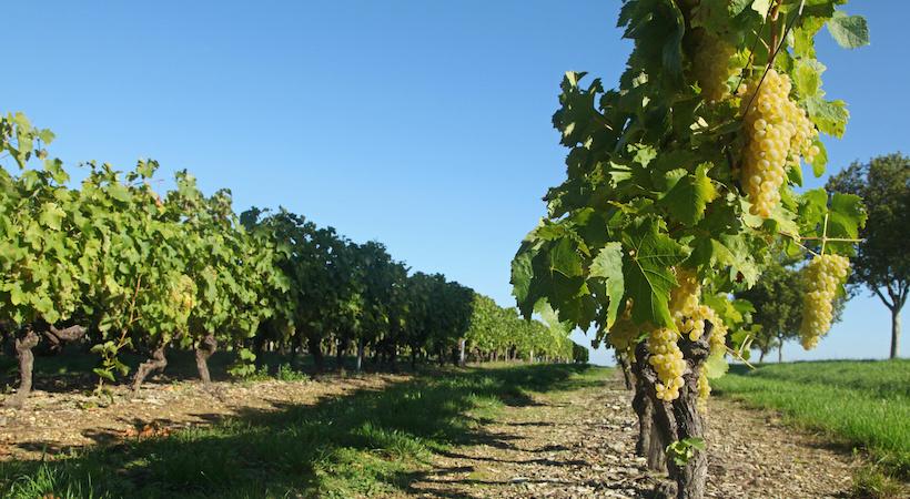 Vignobles charentais