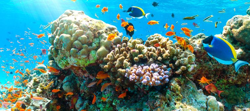 fonds marins des Maldives