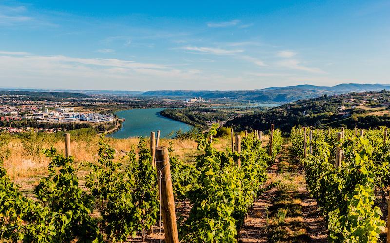 Vignes et Vallée du Rhône